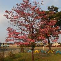 校庭の花は きれいに咲いています
