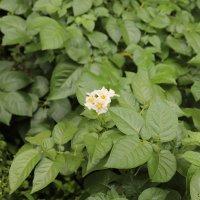 花だんの植物も順調に生長しています。